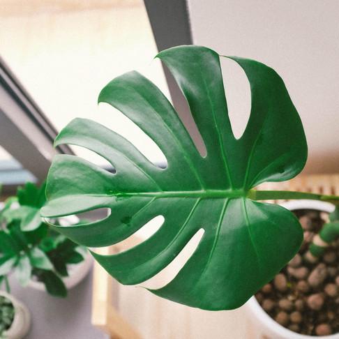 Here's 6 Beautiful Beginner Plants to Adopt in Quarantine