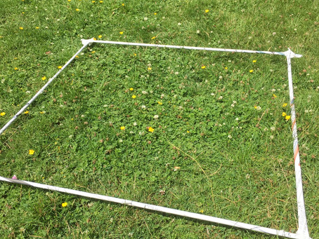 Activity of the day: Getready for more citizen science- make a simple quadrat
