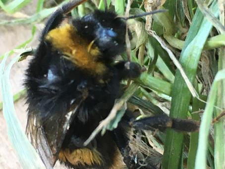 Caterpillar, bumble bee