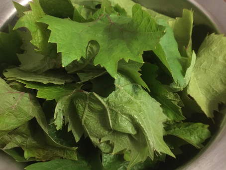 Recipe: Dolmades (vine leaf parcels)