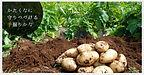 三島馬鈴薯2.jpg