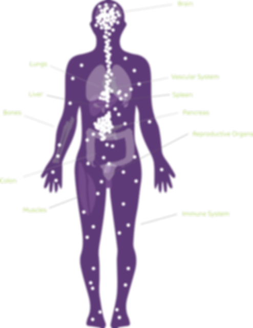Endocannabinoid receptors in the human body