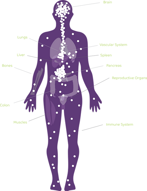 Endocannabinoid receptors in the human body