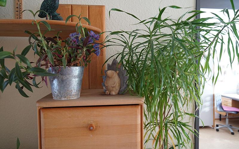 W40_Detail_Pflanzen.jpg