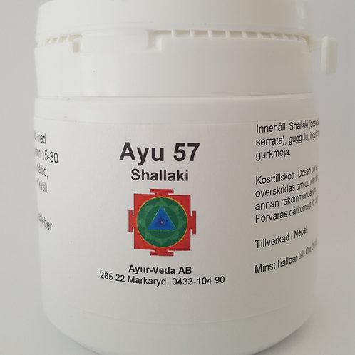 Ayu 57 Shallaki (1 mån)