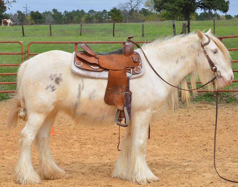 trinket-saddled-rightDSC_5175.jpg