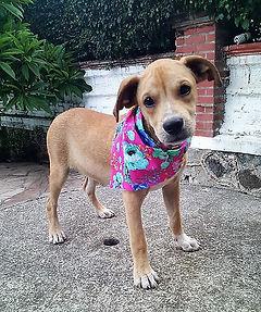 Rosis Rescue Adoption Lucas