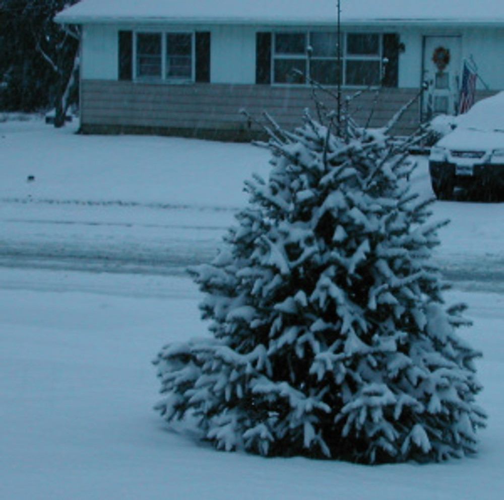snow120813 002
