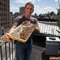 Andrew Coté, apicultor urbano