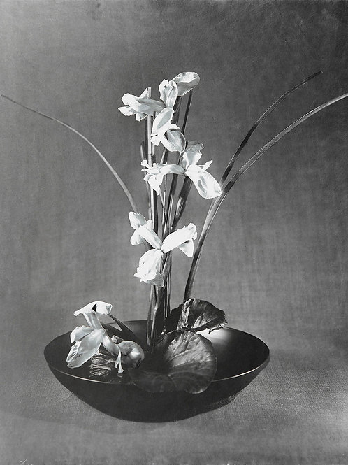 A Wet Collodion Ambrotype print of RHS Silver Gilt Medal Iris's