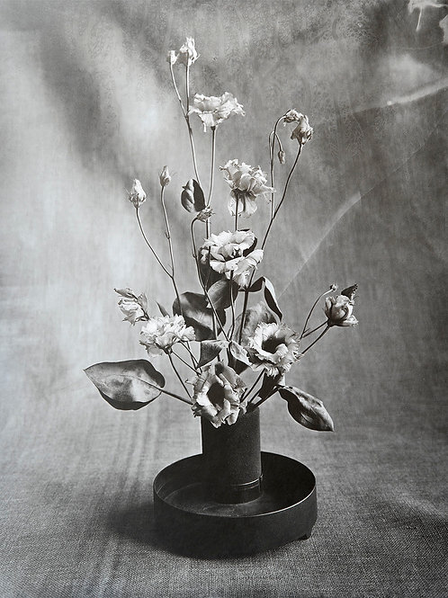 A Wet Collodion Ambrotype print of RHS Silver Gilt Medal Eustoma