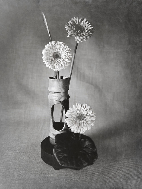 A Wet Collodion Ambrotype print of RHS Silver Gilt Medal Large Gerbera