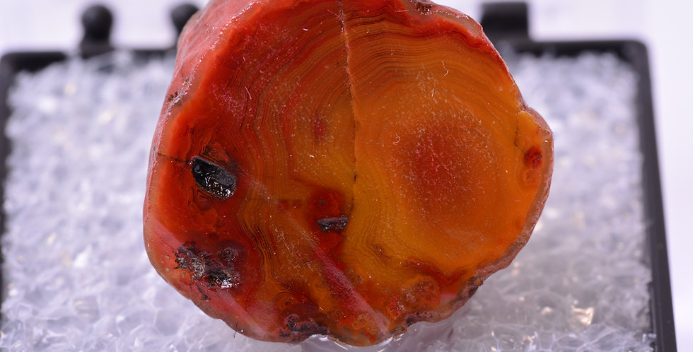 TN Middlefield Scottish Agate Scotland MDL278