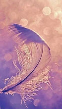 plume violette.jpg