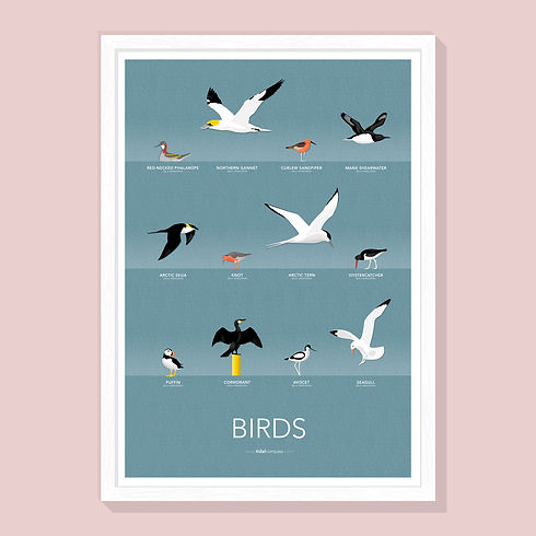 BIRDS [PINK].jpg