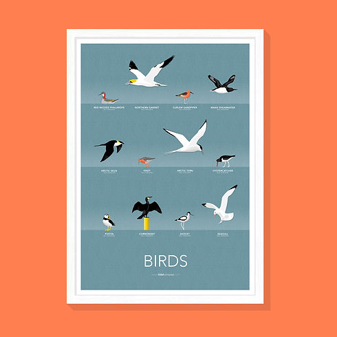 PRINTS [BIRDS].jpg