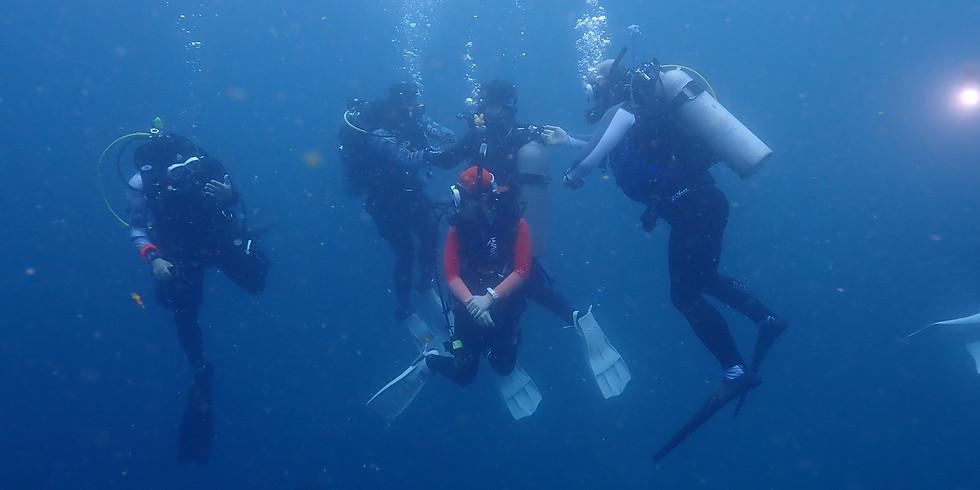 12월 다이빙 투어