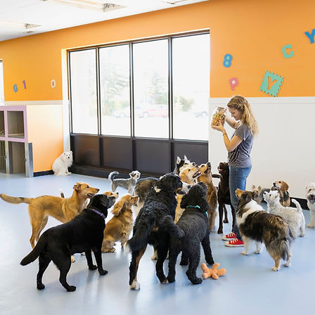dog-daycare-9dc7cf7477f748f7ac99cdee3564