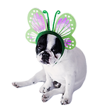 Dog%20Dressed%20as%20Butterfly_edited.pn