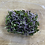 Thumbnail: MICRO RED CABBAGE