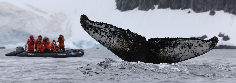 whale tail good.jpg