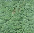 남산 3 - 작은 이미지.jpg
