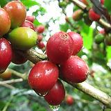 Finca idealista harvest 2011 2012 (1) -