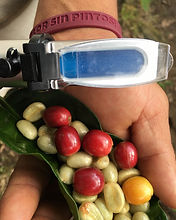 Brix refractometer for specialty coffee cherry picking