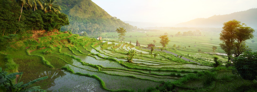 Rice tarrace in mountains. Bali. Indones