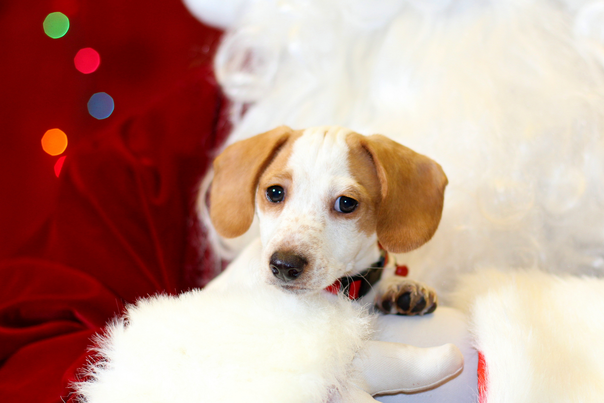 Cape Horn Pets Holiday Photos