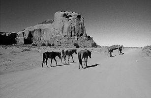 Poor_Horses_by_joachimjk.jpg
