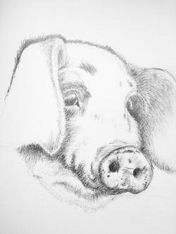 Oink, graphite pencil