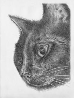 Beni - graphite drawing