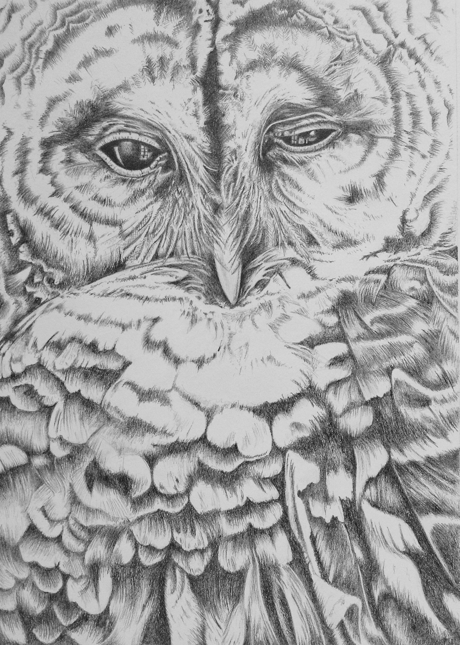 Hoot, graphite pencil