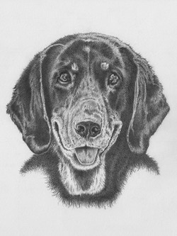 Roxie - graphite  drawing