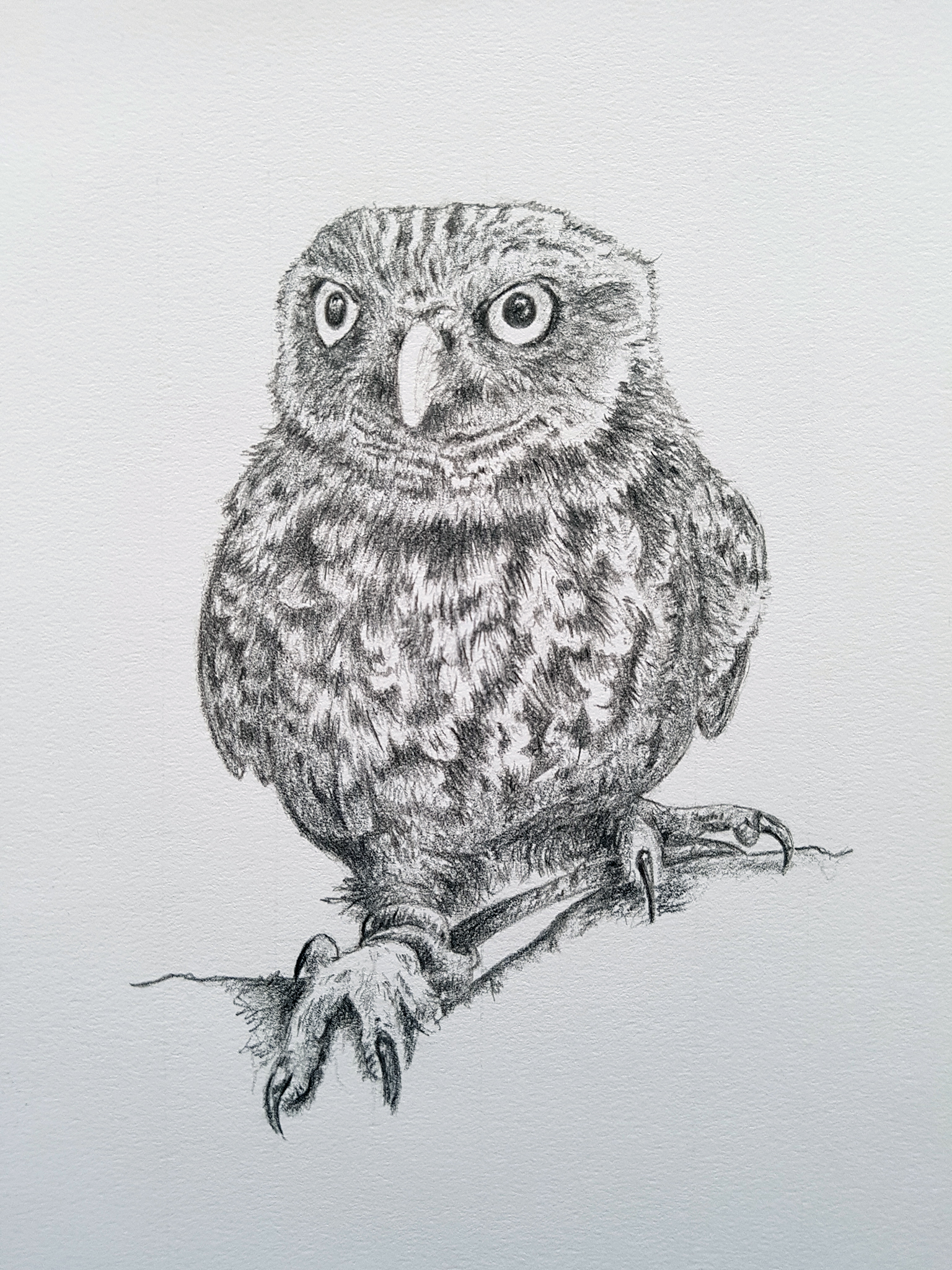 Titch, Little Owl - sketch