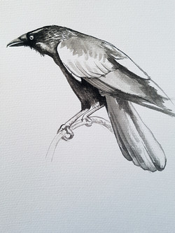 Crow abstract brush and ink