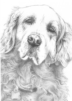 Gilly - graphite pencil