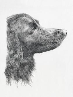 Shilou - graphite drawing