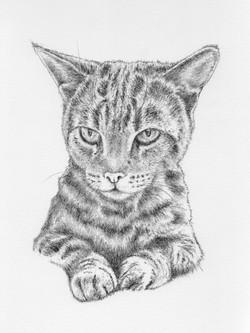 Tinks - pencil sketch