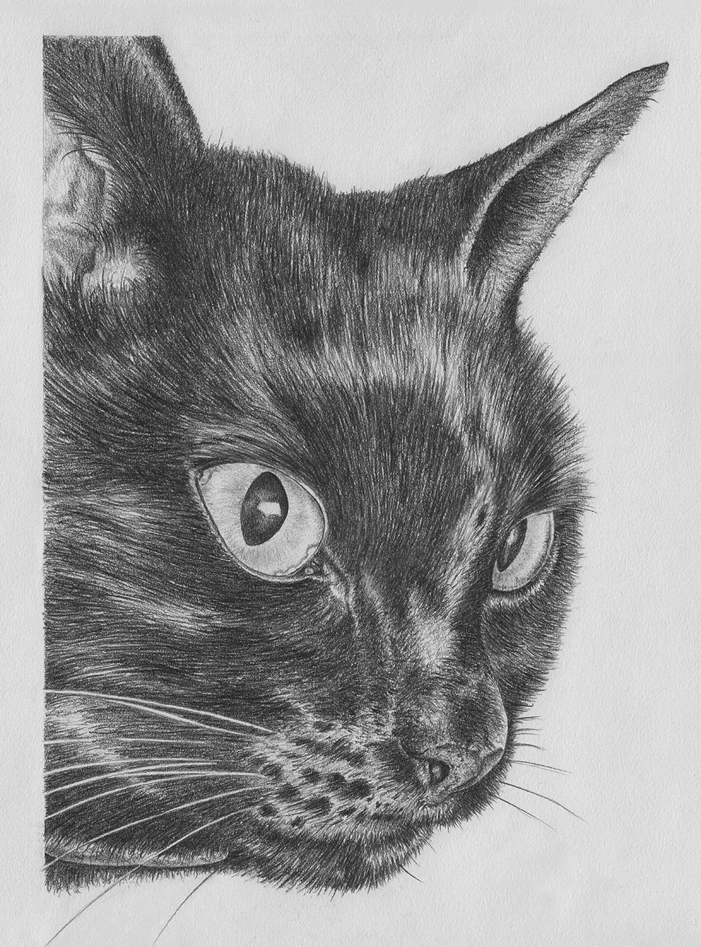 Ushio - graphite drawing