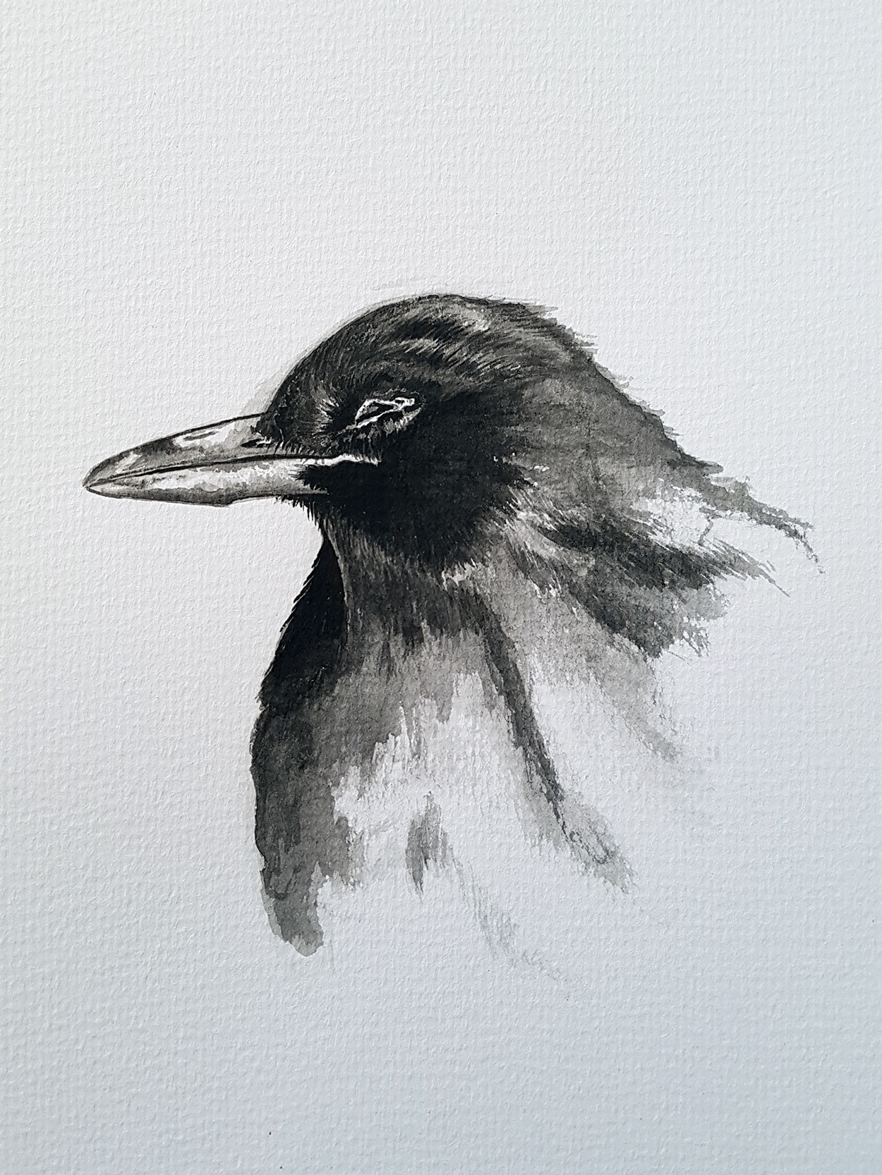 Blackbird roadkill brush and ink
