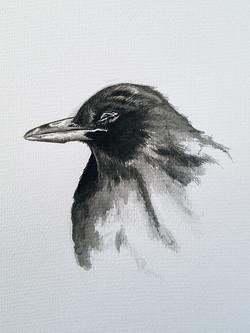 Blackbird roadkill brush and ink