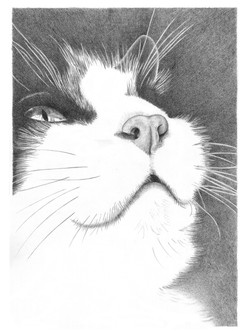 Smudge - graphite drawing
