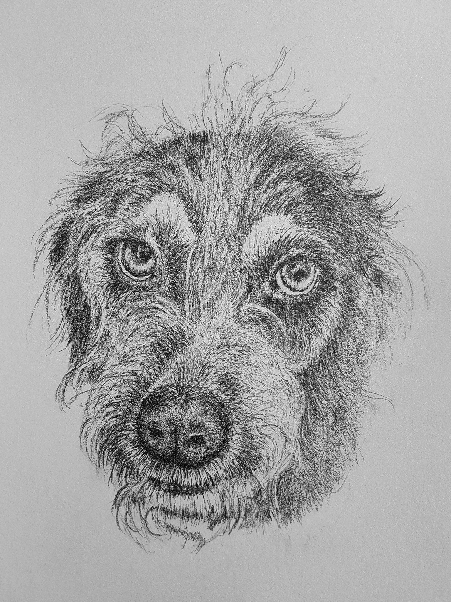 Walter the Dog - sketch