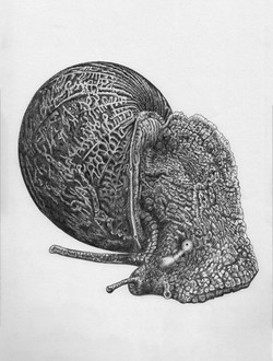 Snail - Eden Project graphite drawing