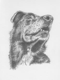 Ellie - pencil sketch