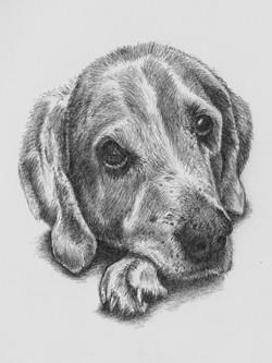 Max - peparatory sketches