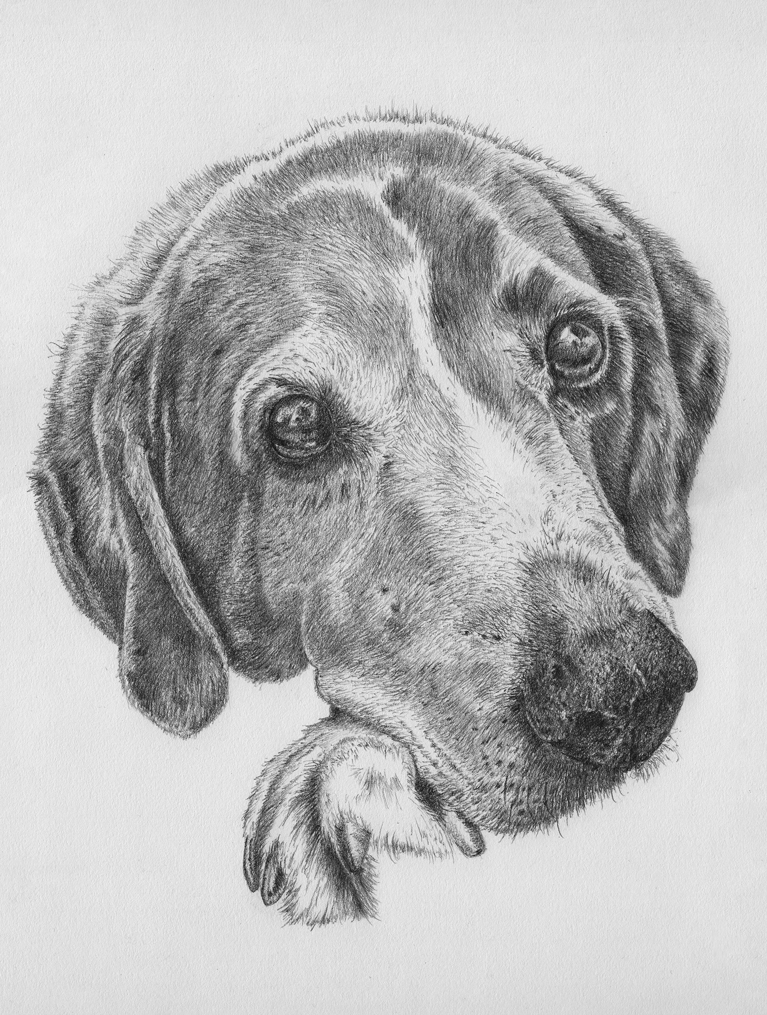 Max - graphite drawing