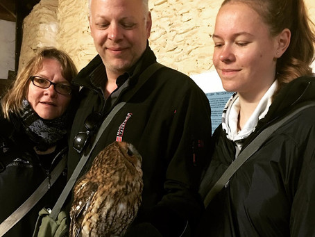 Half Term Treat!   Owl Experience for the whole family.